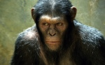 "Caesar (Andy Serkis) in ""Rise of the Planet of the Apes"""